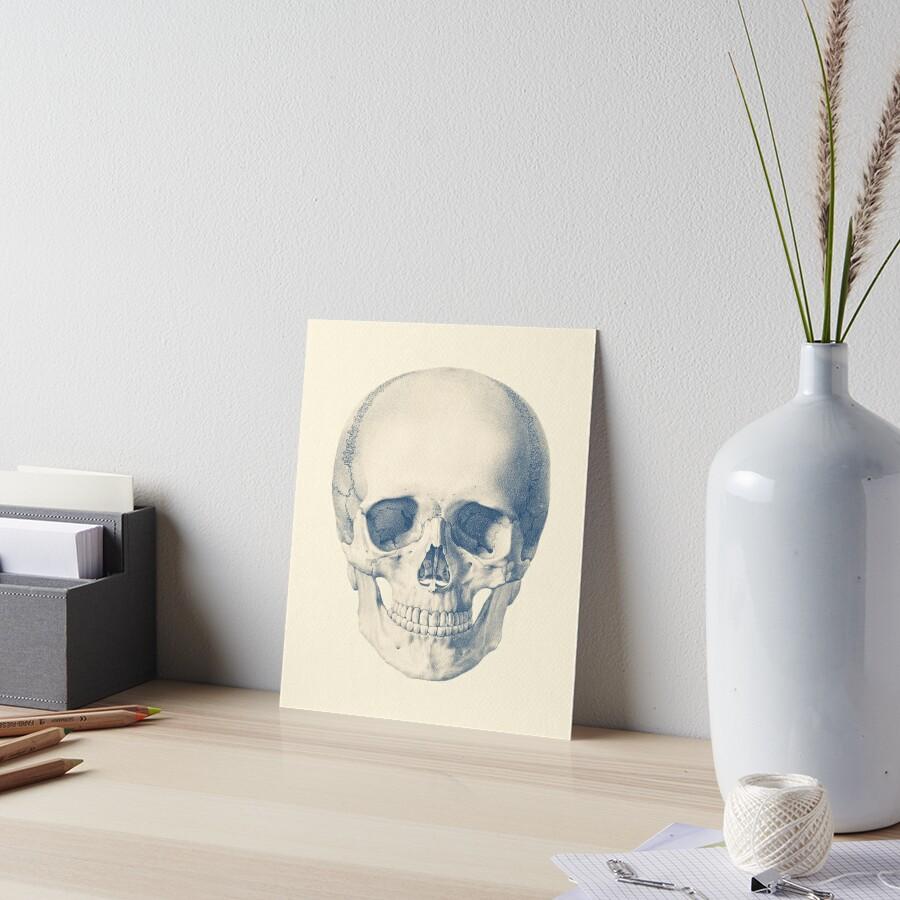 Láminas De Exposición Cráneo Humano Completo Vista Frontal