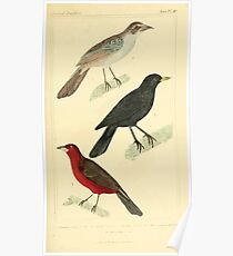 The Animal Kingdom by Georges Cuvier, PA Latreille, and Henry McMurtrie 1834 665 - Aves Avians Birds Poster