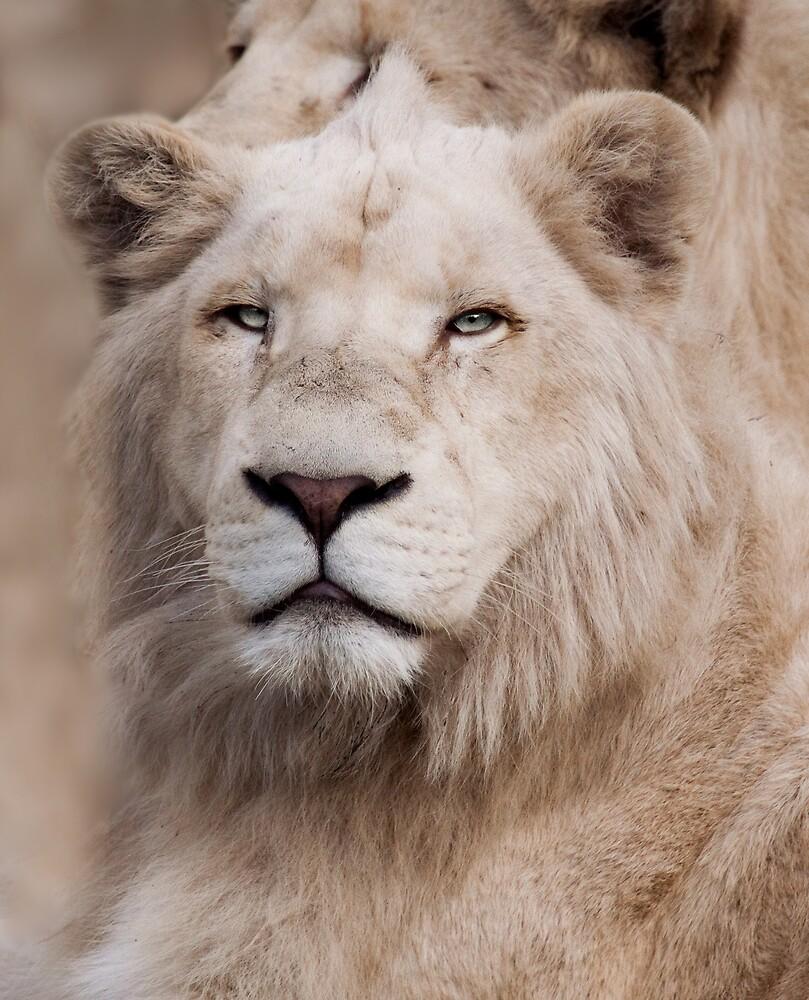 White Lion by Natalie Manuel