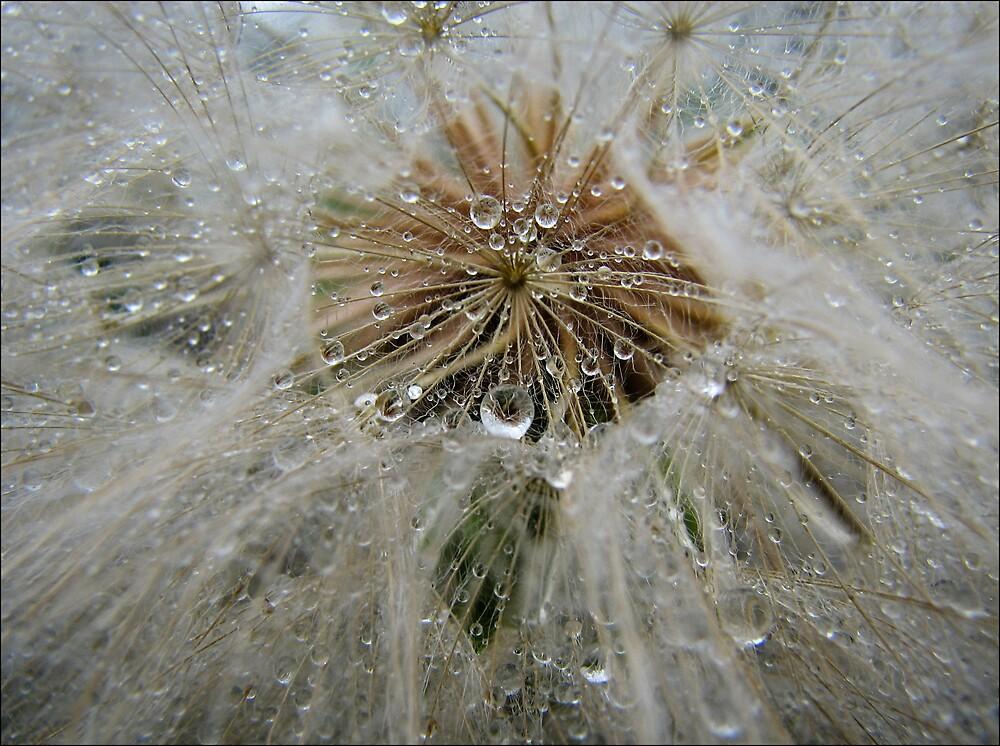 Waterdrops by Clare Reid
