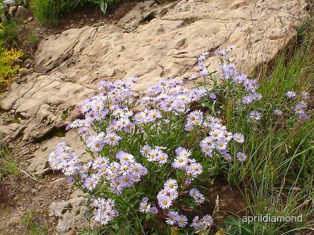 wildflowers by aprildiamond