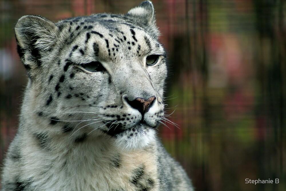 Snow Leopard by Stephanie B