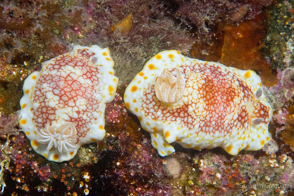 Paired nudis by Stephen Colquitt