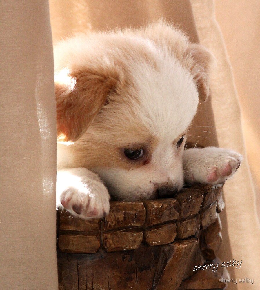 pouting puppy by sherry selby
