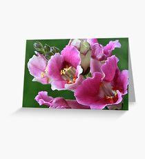 Snapdragon Greeting Card