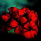 Deep Red by hady elwy
