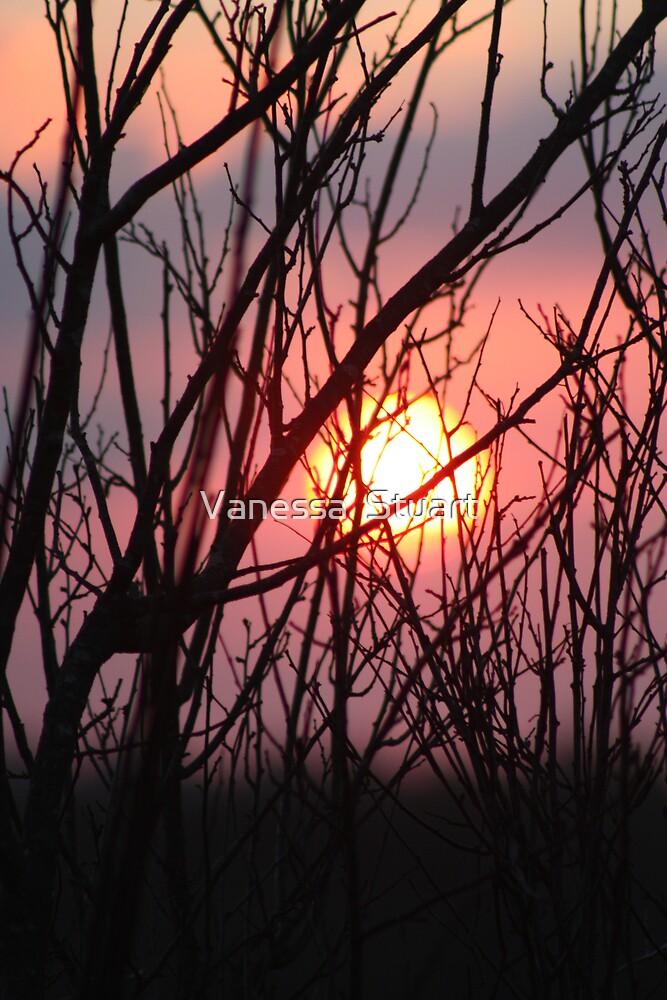 Sunsets by Vanessa  Stuart