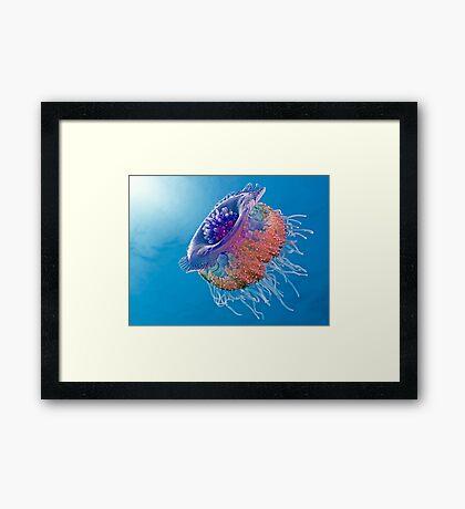 Crown Jellyfish Framed Print
