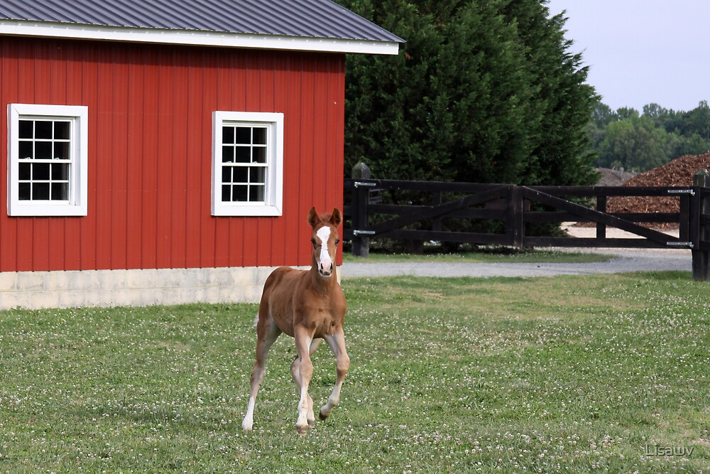 New Baby On The Farm II by Lisawv