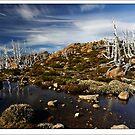 Mt. Field AlpineScape by Robert Mullner