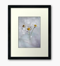 Three chamomiles in vial Framed Print