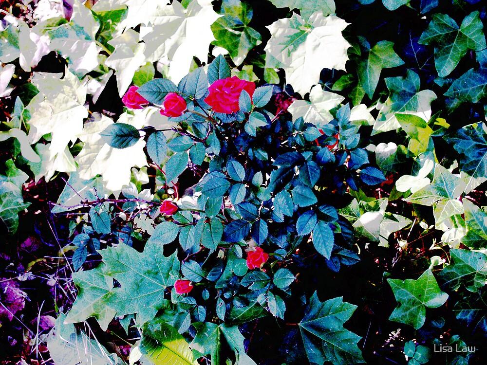 Rose Bush II by Lisa Brower