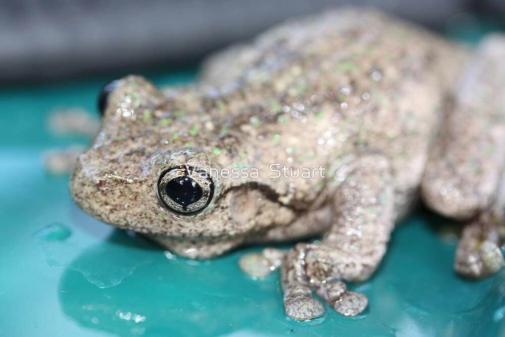 Frogs by Vanessa  Stuart