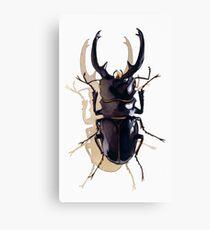 """""""Odontolabis d. subita"""" Stag Beetle Watercolor Canvas Print"""