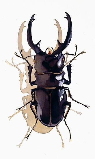 """Odontolabis d. subita"" Stag Beetle Watercolor by Paul Jackson"