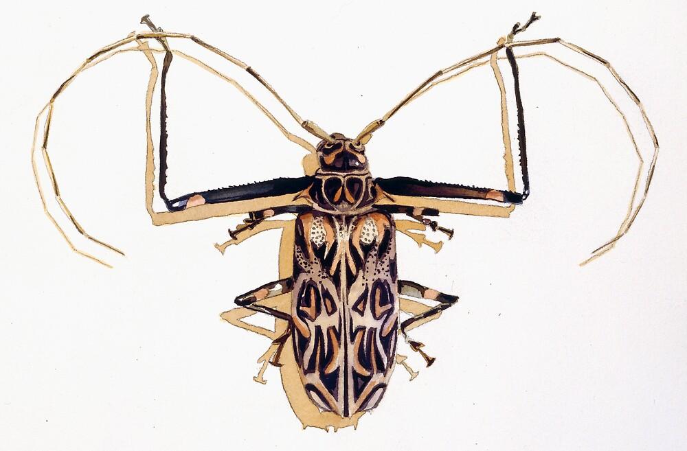 """Acrocinus longimanus"" Harlequin Beetle Watercolor by Paul Jackson"