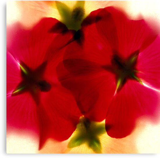 Red flower by iOpeners
