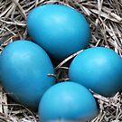 Robin Eggs by Sheri Nye