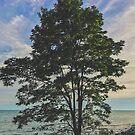 Baum Chill von alexlikeart1