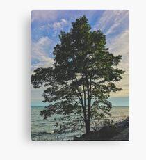 Tree chill Canvas Print