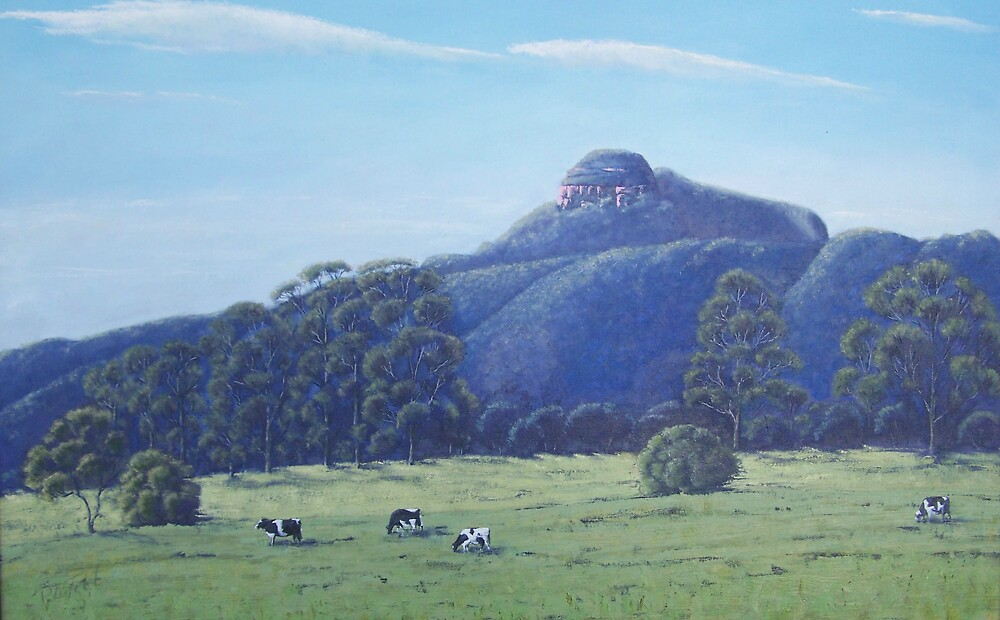 cow paddock by peter tebb