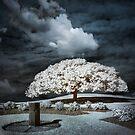 When a Tree Dreams by Ben Ryan