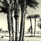 Palms look to the sky.. by hady elwy