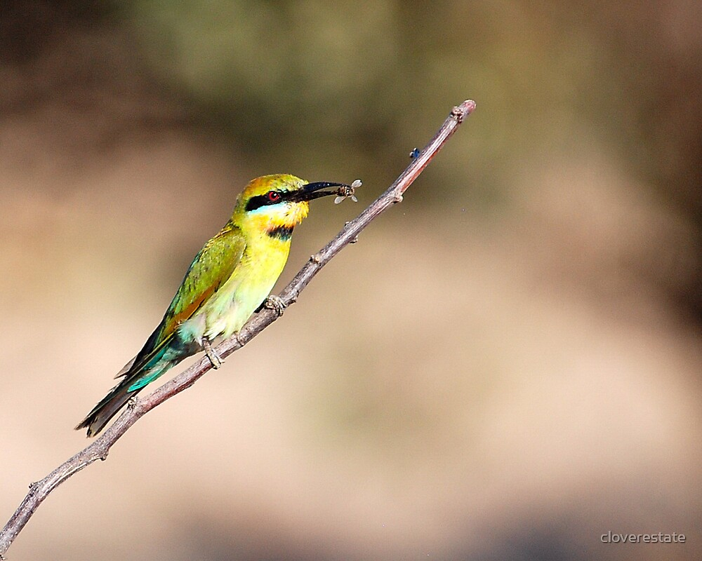 Rainbow bee-eater by cloverestate