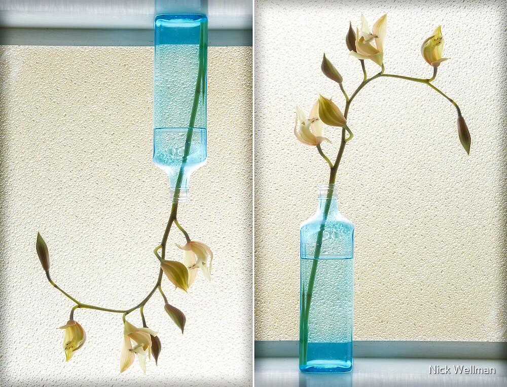 Burnett St Orchids 09 by wellman