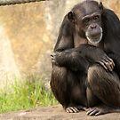 Contemplation.. by Steve Bullock