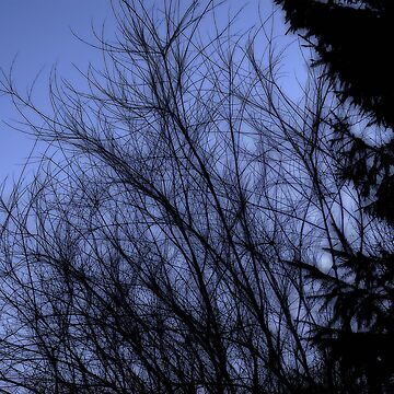 Tree branches by boogeyman
