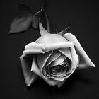 The Rose by liaimages
