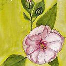 Hibiscus by JoyMurray