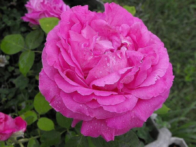 A six-inch beauty by Bloodnok