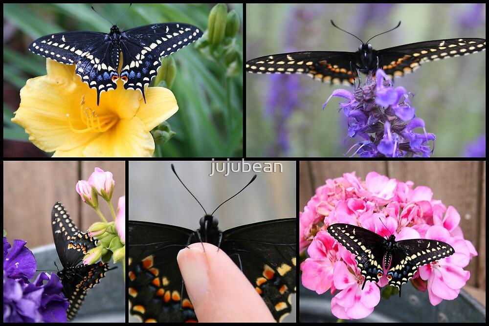 Black Swallowtail by jujubean