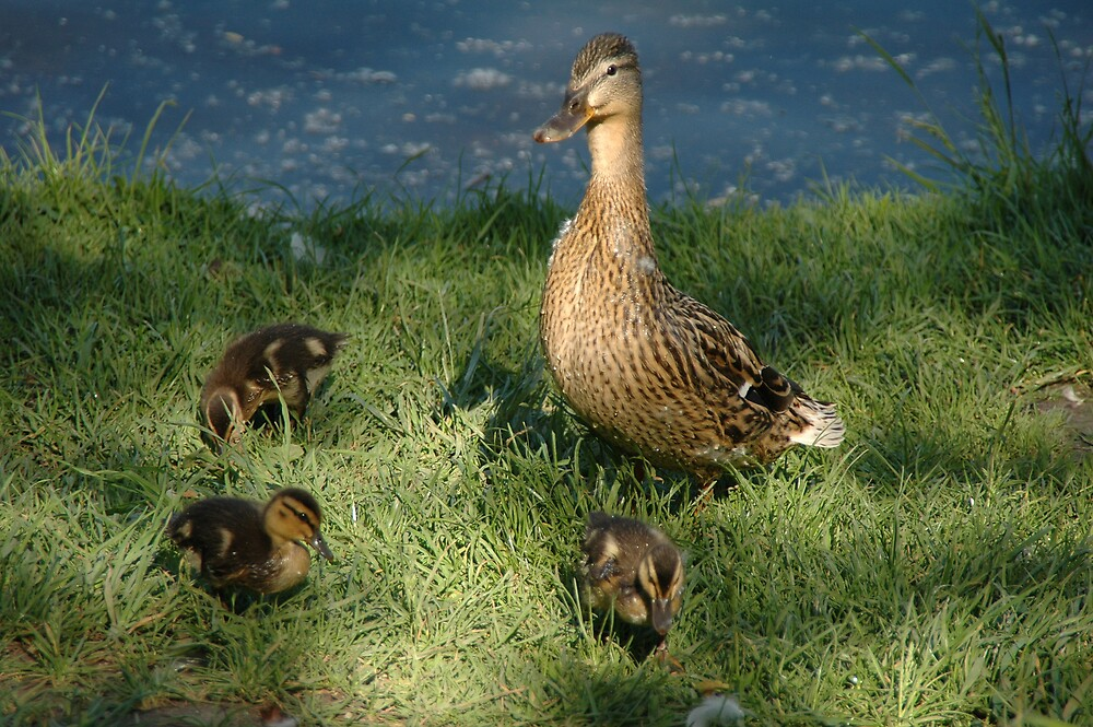 Duck family by Beatminister