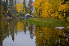 Fall Colors in Bishop by photosbyflood