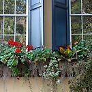Charleston flower window by justcallmetom