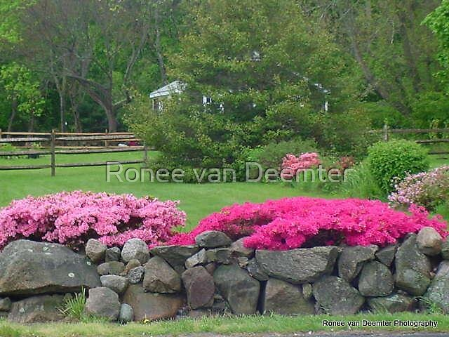 Garden in New England by Ronee van Deemter