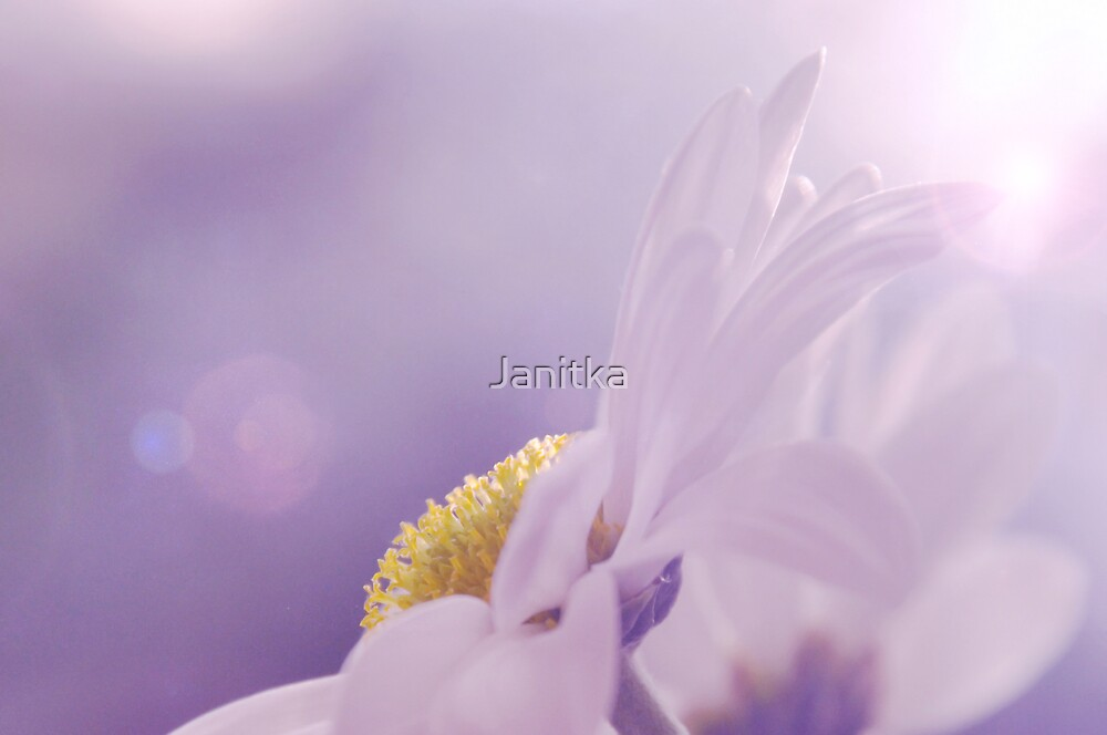 ~Purple Saturday's Flare~ by Janitka
