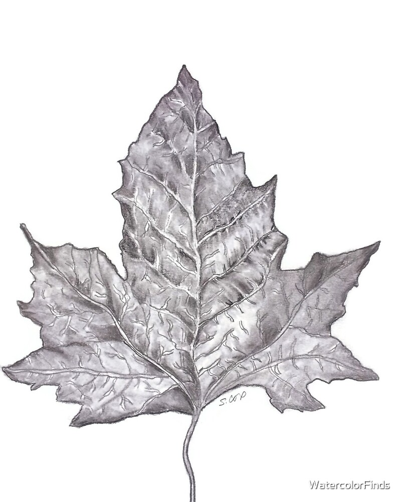 Pencil drawing leaf graphite nature sketch nature lover print