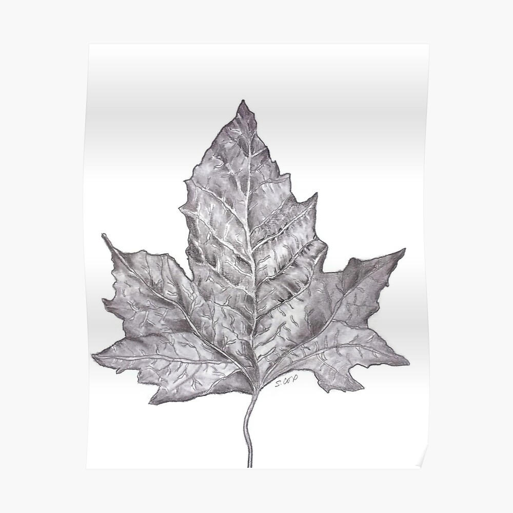 Pencil drawing leaf graphite nature sketch nature lover print poster