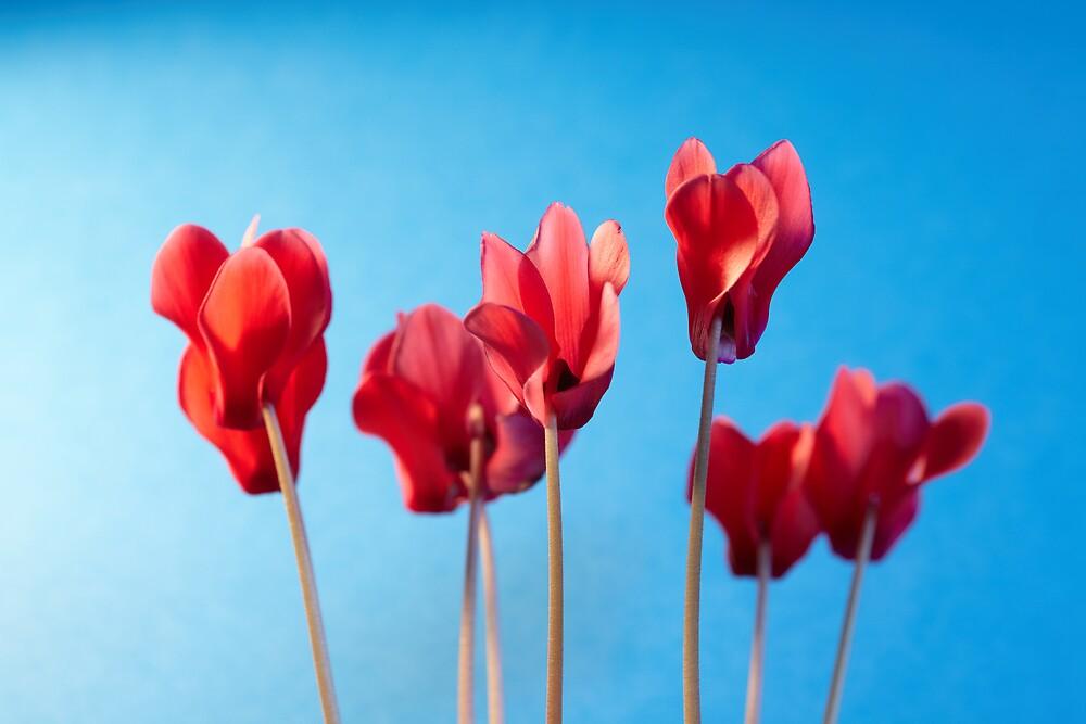 Flowers by Paul Burgess