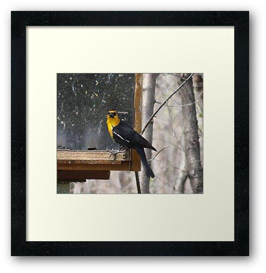 Yellow Headed Blackbird by Leslie van de Ligt