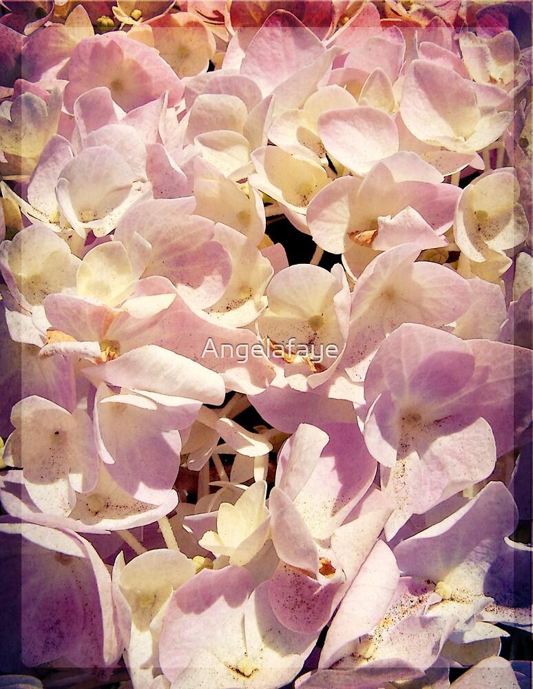 May Flowers by Angelafaye