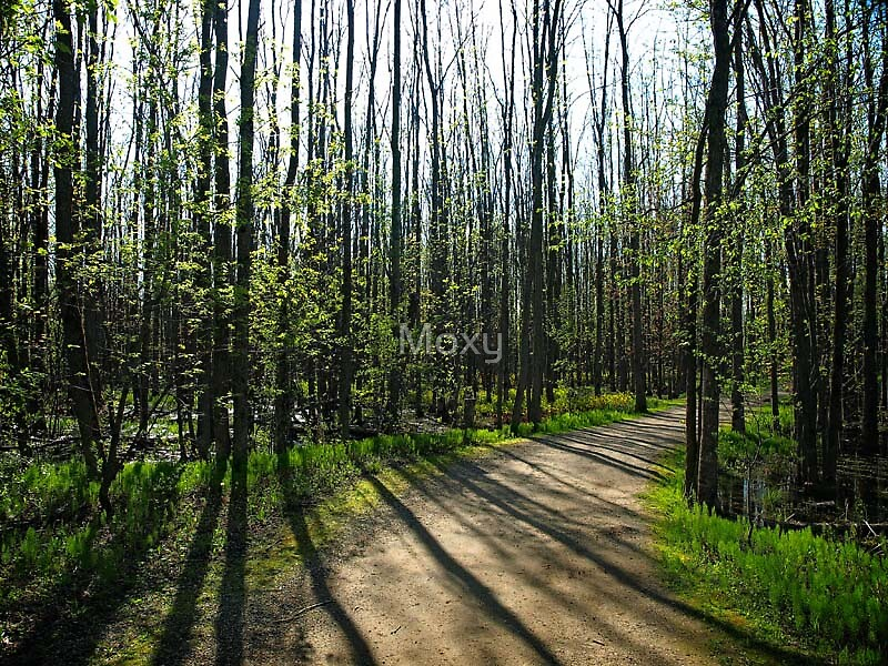 Shadows in the Woods. by Moxy