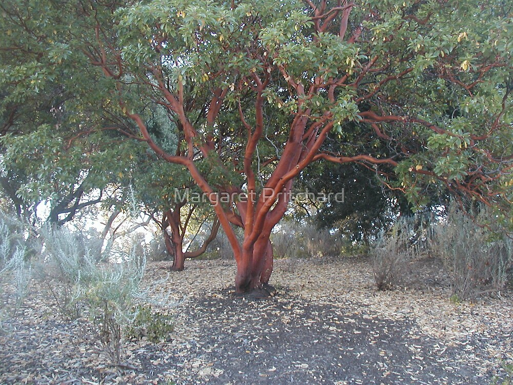 Tree by Margaret Pritchard