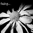fading... by Terri~Lynn Bealle