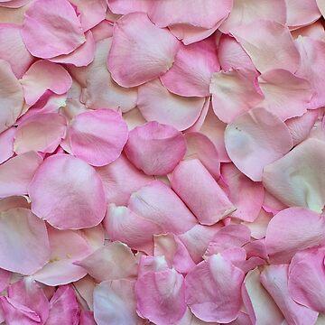 Rose Fantasy photo by belka