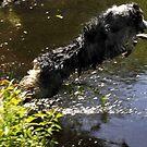 Diving Dog by Anne Smyth